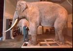 Siam l'éléphant