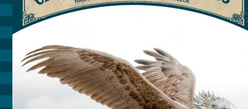 Le livre extraordinaire des animaux fantastiques ♥
